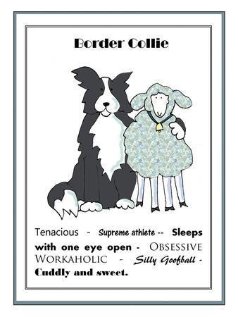 XL Border Collie