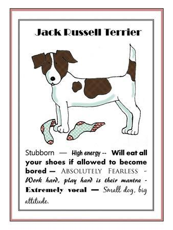 XL Jack Russell