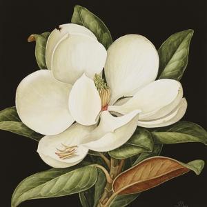 Magnolia Grandiflora, 2003 by Jenny Barron