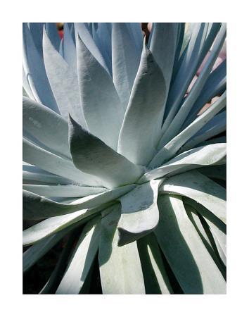 Cactus I