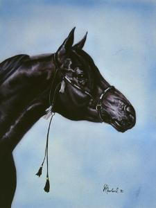 Black Arabian by Jenny Newland