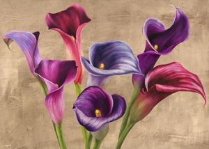 Multi-colored Callas by Jenny Thomlinson