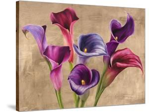 Multi-colored Callas by Jenny Thomlinson