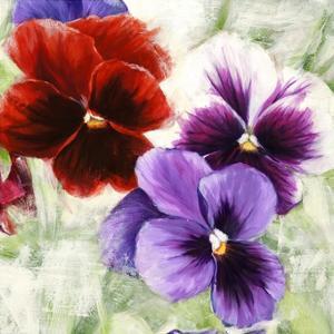 Pansies I by Jenny Thomlinson