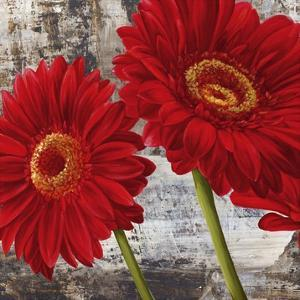 Red Gerberas I by Jenny Thomlinson