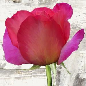 Spring Roses II by Jenny Thomlinson