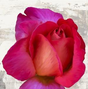 Spring Roses III by Jenny Thomlinson