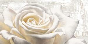 White on White by Jenny Thomlinson