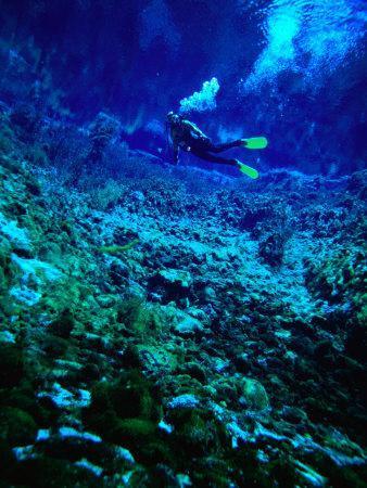 Diver Underwater, Nelson, New Zealand
