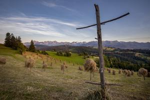 Hay stooks in foothills of Carpathian Mountains on outskirts of Bukowina Tatrzanska village, Southe by Jeremy Bright