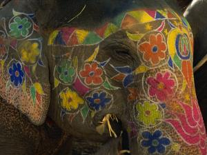 Painted Elephant, Used for Transporting Tourists, Amber Palace, Jaipur, Rajasthan, India by Jeremy Bright