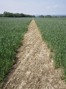 Pathway Through Field, Essex, United Kingdom by Jeremy Bright