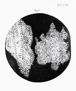 Drawing of Cork Under Microscope by Robert Hooke by Jeremy Burgess