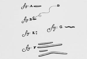 Drawings of Animalcules Form Leeuwenhoek's Letter by Jeremy Burgess