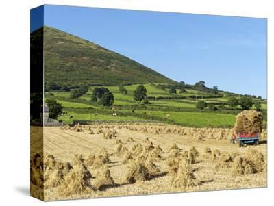 Oat Stooks, Knockshee, Mourne Mountains, County Down, Ulster, Northern Ireland, UK, Europe