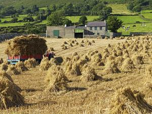 Oat Stooks, Knockshee, Mourne Mountains, County Down, Ulster, Northern Ireland, UK, Europe by Jeremy Lightfoot