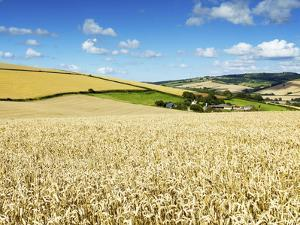 Summer Fields, Thorverton, Devon, England, United Kingdom, Europe by Jeremy Lightfoot