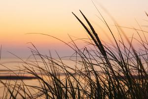 Dune Grasses at Coast Guard Beach in the Cape Cod National Seashore. Eastham, Massachusetts by Jerry and Marcy Monkman