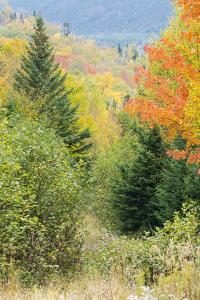Fall Foliage on the Western Side of Crocker Mountain in Reddington Township, Maine by Jerry and Marcy Monkman