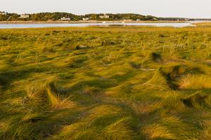 Grass , Cape Cod National Seashore, Massachusetts by Jerry and Marcy Monkman