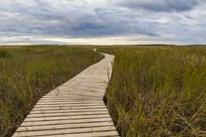 The Boardwalk Through the Tidal Marsh at Mass Audubon's Wellfleet Bay Wildlife Sanctuary by Jerry and Marcy Monkman