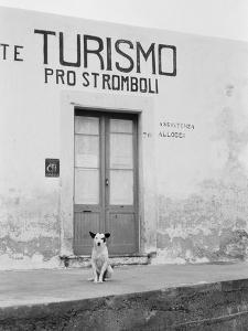 Dog Guarding a Tourist Office by Jerry Cooke