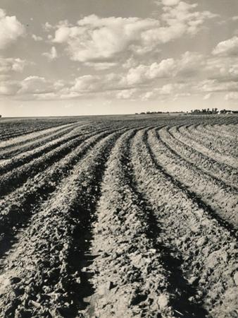 Local Farmland