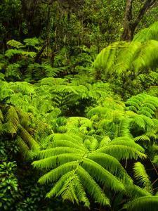 Lush tropical greenery in Hawaii Volcanoes National Park, Big Island, Hawaii by Jerry Ginsberg