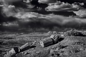 Petrified Forest National Park, Arizona by Jerry Ginsberg