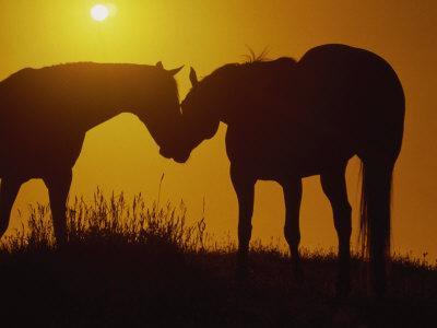 Silhouette of Horses at Sunset