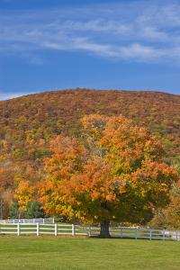 A Maple Tree in Fall at Castle in the Clouds, New Hampshire by Jerry & Marcy Monkman