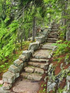 A Stone Staircase at the Thuya Gardens in Northeast Harbor, Maine, Usa by Jerry & Marcy Monkman