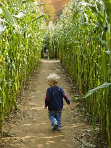 A young boy wanders a corn maze at the Moulton Farm, Meredith, New Hampshire, USA by Jerry & Marcy Monkman