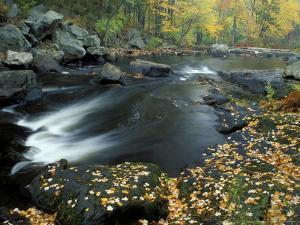 Autumn Leaves at Packers Falls on the Lamprey River, New Hampshire, USA by Jerry & Marcy Monkman