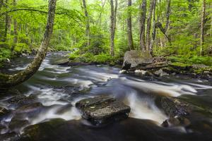 Cold Stream in Maine's Northern Forest. Cold Stream Gorge by Jerry & Marcy Monkman