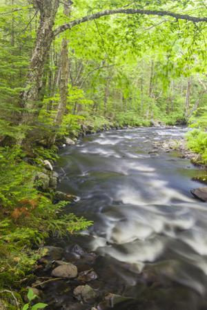 Cold Stream in Maine's Northern Forest. Cold Stream Gorge