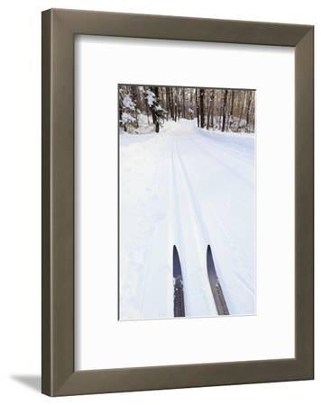 Cross Country Skis, Notchview Reservation, Windsor, Massachusetts