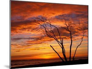 Dead Tree on Lighthouse Beach at Sunrise, Sanibel Island, Florida, USA by Jerry & Marcy Monkman