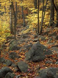 Fall Foliage on the Tarn Trail of Dorr Mountain, Maine, USA by Jerry & Marcy Monkman