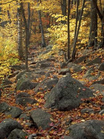 Fall Foliage on the Tarn Trail of Dorr Mountain, Maine, USA