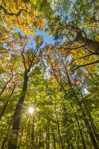 Fall in a forest in Amesbury, Massachusetts. by Jerry & Marcy Monkman