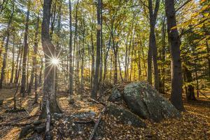 Fall in the forest along the Sweet Trail in Durham, New Hampshire. by Jerry & Marcy Monkman