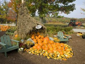 Gourds at the Moulton Farm farmstand in Meredith, New Hampshire, USA by Jerry & Marcy Monkman