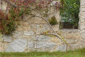 Ivy Grows on an Old Barn Foundation, Plymouth, Massachusetts by Jerry & Marcy Monkman