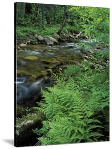 Lady Fern, Lyman Brook, The Nature Conservancy's Bunnell Tract, New Hampshire, USA by Jerry & Marcy Monkman