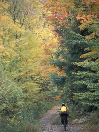Mountain Biking on Old Logging Road of Rice Hill, Green Mountains, Vermont, USA