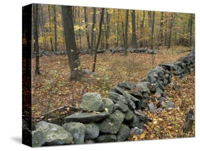 Oak-Hickory Forest in Litchfield Hills, Kent, Connecticut, USA