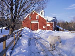 Pony and Barn near the Lamprey River in Winter, New Hampshire, USA by Jerry & Marcy Monkman
