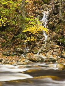 Roaring Brook in Fall in Vermont's Green Mountains National Forest, Sunderland, Vermont, Usa by Jerry & Marcy Monkman
