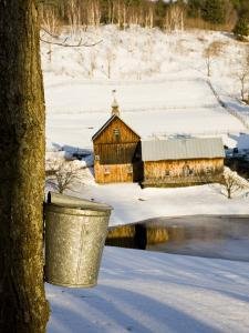 Sap buckets on Maple Trees, Pomfret, Vermont, USA by Jerry & Marcy Monkman